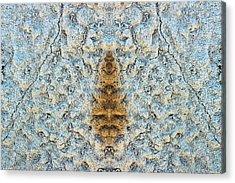 Bug Rock Acrylic Print