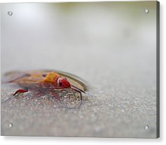 Bug Skimming Acrylic Print