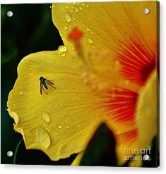 Bugged Hibiscus Acrylic Print