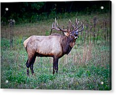 Acrylic Print featuring the photograph Bugle Solo From Bull Elk by John Haldane