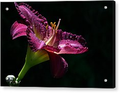 Bugler Acrylic Print