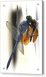 Bugzilla Acrylic Print