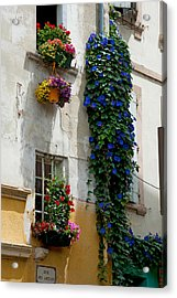 Building With Flower Pots On Each Acrylic Print by Panoramic Images
