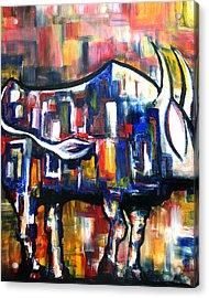 Bull At Sunset Acrylic Print