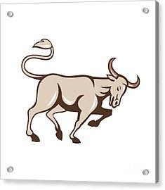 Bull Charging Side Cartoon Acrylic Print by Aloysius Patrimonio