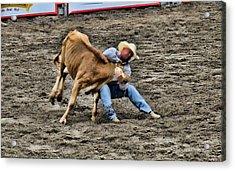 Bull Dogging Acrylic Print