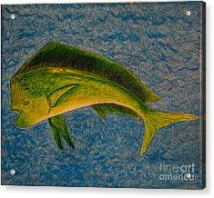 Bull Dolphin Mahimahi Fish Acrylic Print