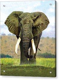 Bull Elephant Acrylic Print by Chris Heitt