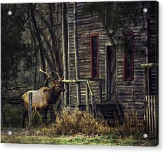 Bull Elk By The Old Boxley Mill Acrylic Print