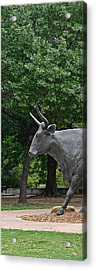 Bull Market Quadriptych 1 Of 4 Acrylic Print by Christine Till
