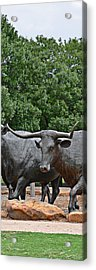 Bull Market Quadriptych 3 Of 4 Acrylic Print by Christine Till
