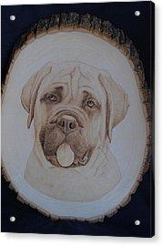 Bull Mastiff Acrylic Print by Oksana Rahbari