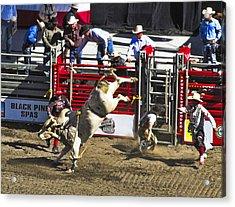 Bull Riding Acrylic Print by Ron Roberts