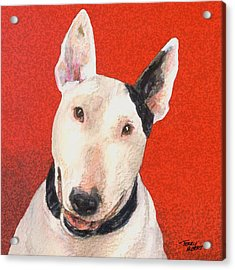 Bull Terrier Acrylic Print