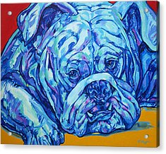 Bulldog Blues Acrylic Print