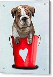 Bulldog Buckets Of Love Acrylic Print by Kelly McLaughlan