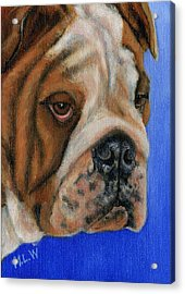 Beautiful Bulldog Oil Painting Acrylic Print by Michelle Wrighton
