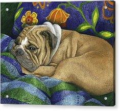 Bulldog Napping Acrylic Print