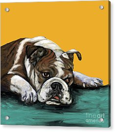 Bulldog On Yellow Acrylic Print