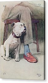 Bulldog Pen & Ink & Wash On Paper Acrylic Print by Cecil Charles Windsor Aldin