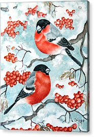 Bullfinch Couple Acrylic Print