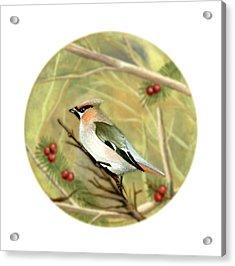 Bullfinch Acrylic Print