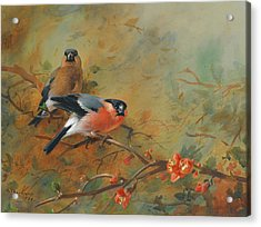 Bullfinches And Pyrus Japonica Acrylic Print by Archibald Thorburn