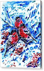 Bullfinches Acrylic Print by Zaira Dzhaubaeva