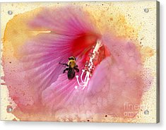 Bumble Bee Bliss Acrylic Print by Betty LaRue