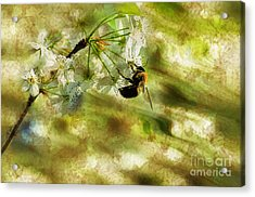 Bumble Bee Eating Sweet Nectar Acrylic Print by Dan Friend