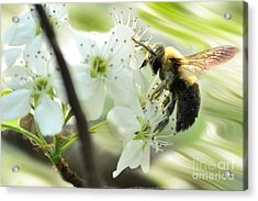 Bumble Bee On Flower Acrylic Print by Dan Friend