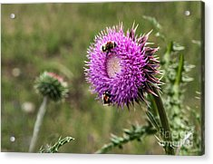 Acrylic Print featuring the photograph Bumble Bees by Mae Wertz