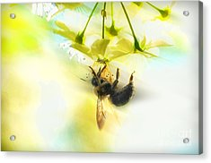 Bumble Going In For The Nectar Acrylic Print by Dan Friend