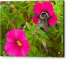 Bumblebee Hug Acrylic Print by Heidi Manly