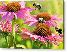 Bumbling Bees Acrylic Print by Bill Pevlor