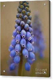 Bunch Of Grapes Acrylic Print by Irina Wardas