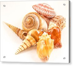 Bunch Of Shells Acrylic Print by Jean Noren