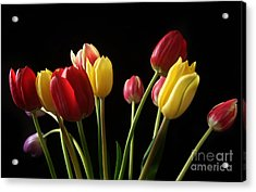Bunch Of Tulips Acrylic Print