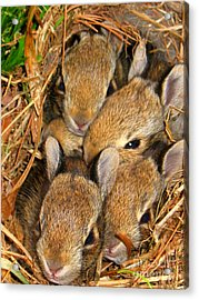 Bunny Babies Acrylic Print