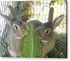Bunny Friends Acrylic Print