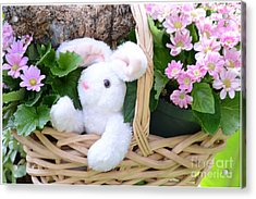 Bunny In A Basket Acrylic Print by Kathleen Struckle