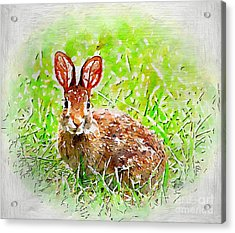 Bunny - Watercolor Art Acrylic Print by Kerri Farley