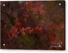 Burgundy Branch Acrylic Print by Jennifer Apffel