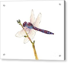 Burgundy Dragonfly Acrylic Print