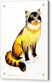 Burmese Cat Acrylic Print by Kurt Tessmann