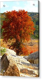 Burning Cypress Acrylic Print by David  Norman