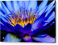 Burning Water Lily Acrylic Print