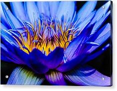 Burning Water Lily Acrylic Print by Louis Dallara