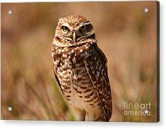 Burrowing Owl Impressions Acrylic Print