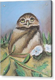Burrowing Owl Of Cape Coral  Acrylic Print by Melinda Saminski